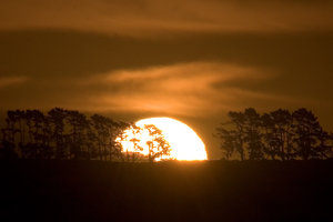 Sunset II: Sun setting behind trees