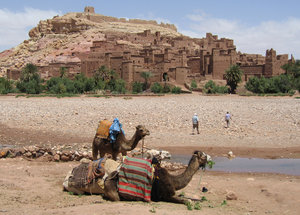 Camels at the kasbah, Taourit