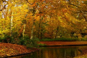 Autum in parks 1