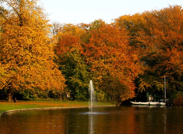 Autumn park: No description