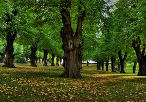 Autumn park - HDR