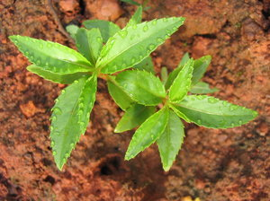 Sapling: no description