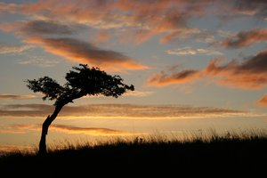 Lone Tree at Sunrise: http://www.scottliddell.n ..