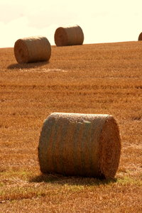 Hay at Harvest 2
