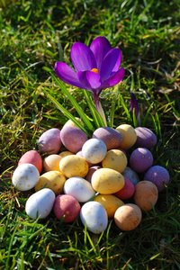 crocus & eggs: no description