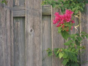 Fence: Fence with flower border