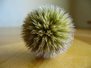 prickly ball