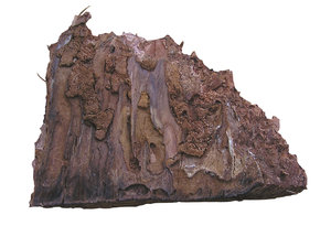 Bark piece: A piece of tree's bark.