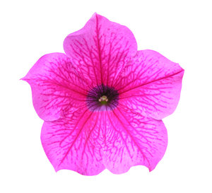 Pink flower: A small flower.