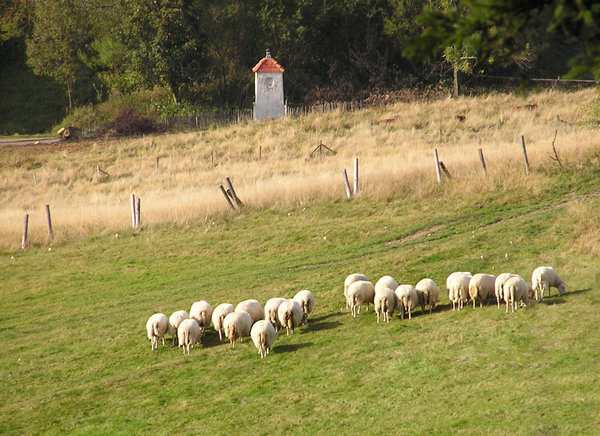 Sheep on the hill: A sheep herd. Why do sheep do not have a plural form?