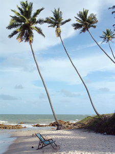 > Beach coconut palm3: Chair on the beach, Tabatinga, Paraba, BrazilCadeira na praia, Tabatinga, Paraba, Brasil