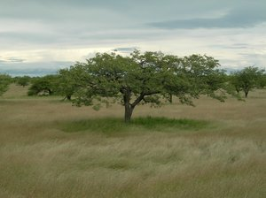 tree 2: photo taken in Namibia