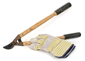 Pruners and Gloves