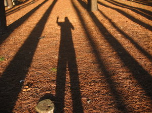 Tree shadows & photographe: wood shadows including the photographer