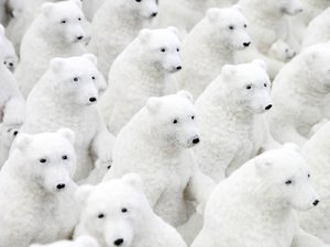 Ice bear group