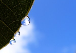 Reflections: Sky and clouds reflected in raindrops on a leaf.