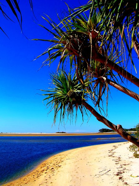 Paradise 4: Semi-tropical beach on the coast of Queensland, Australia. Framed by pandanus trees and a glorious sky.