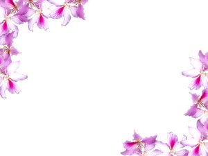 Floral Border 10: Floral border on blank page. Lots of copyspace. Not