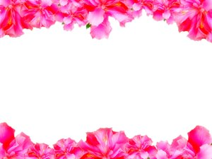 Floral Border 5: Floral border on blank page. Lots of copyspace.