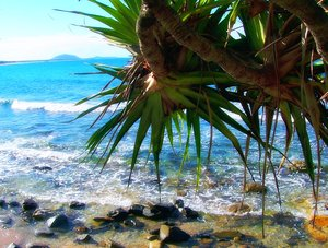 Tropical: Pandanus trees against the warm, colourful Pacific ocean in Queensland.
