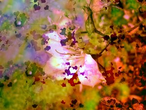 Hearts and Flowers 1: Delicate flower blended with hearts makes a pretty image for a Valentine's or Mother's Day theme. Could also be used for a wedding theme or to illustrate love. Looks better in the large version.