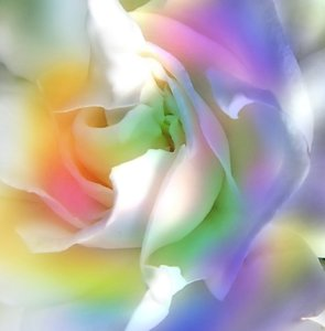 Rainbow Gardenia: A gardenia edited with pastel rainbow colours.
