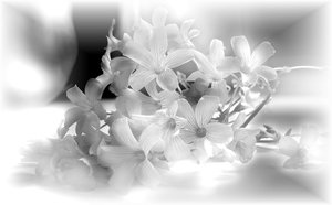 Flowers 2: A tiny bouquet of flowers in monotone, with a diffused effect.