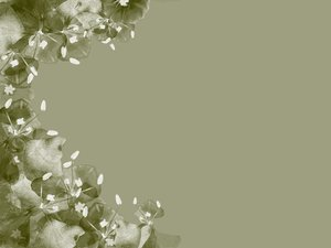 Floral Border: A border of flowers in muted old fashined green, sepia and white. Lots of copyspace. Photo and graphic. Remember, no RGB image may be redistributed without permission.