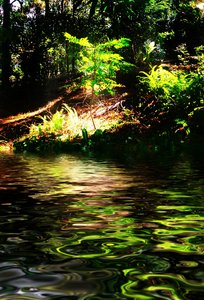 Water Scene 5: Sun dappled trees by a stream of water. You may like: http://www.rgbstock.com/photo/pFLO2Vy/ or http://www.rgbstock.com/photo/pnGW91a/