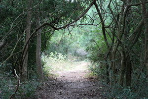 Walking Path: A walk through the woods in Seabrook, Texas