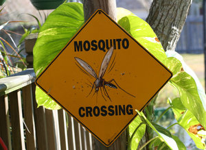 Mosquito Crossing: Warning Sign