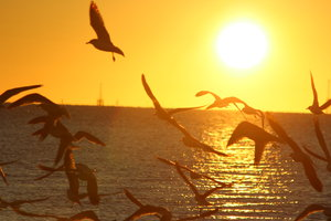 Bright Sunrise: Seagulls at sunrise