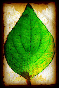 Stained Leaf
