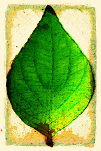 Grunge Leaf 3: A variation of my grunge leaf.Please visit my stockxpert gallery:http://www.stockxpert.com ..