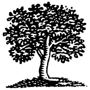 Tree Art 1: Hand drawn tree graphic.Please visit my stockxpert gallery:http://www.stockxpert.com ..