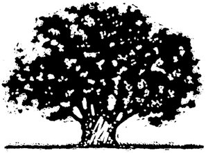 Tree Art 2: Hand drawn black and white tree.
