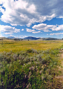 Green plains 2: green plains in Yellowstone national park
