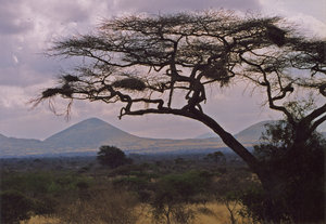 african landscape 2: african landscape in Tzavo national Park