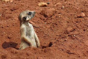 Meerkat Manor 3: Looking forward to feedback! Please credit if possible or drop me a line via http://www.jule.se