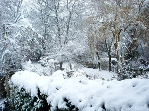 Snowing in Kent: This is the view of my garden in West Wickham Kent. Looks great all covered in snow.