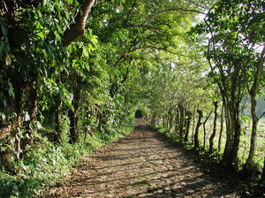 Mexican jungle: A shot of a lonely path located at the northernmost topical jungle on the planet. Veracruz - México