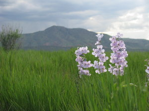 Springtime in the Rockies 1: We had an especially wet spring, which made for great wildflowers!