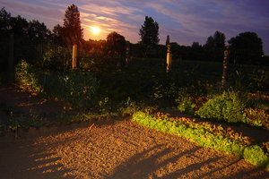 My garden by night: A sunset in my garden...RATE THIS PIC IF YA DOWNLOAD IT, THANKS !