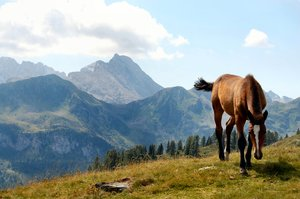 Pony on Austrian mountain