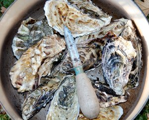 Oysters 1: No description