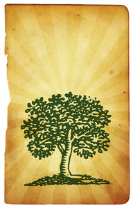 Tree Art 3: Variations on a tree graphic.For a HI RES version of this image, please visit: http://www.stockxpert.com ..