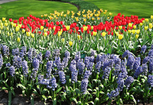 flowers of Holland: fields and gardens in Holland, full of beautiful flowers of all kind and colors