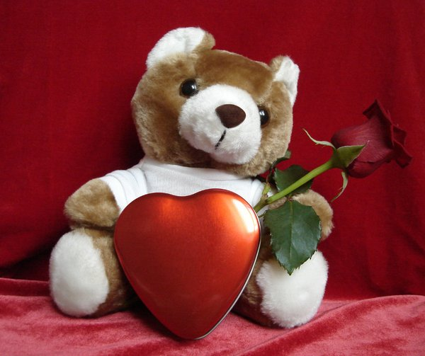 Teddy loves you: Sweet Teddy has got message for you :-)