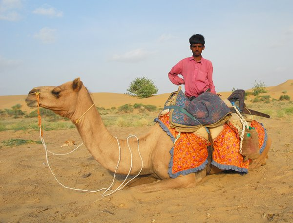 Incredible India: Camel and its drover in Tar Desert, Rajastan, India