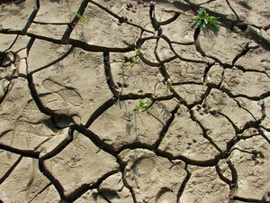texture: cracked soil texture